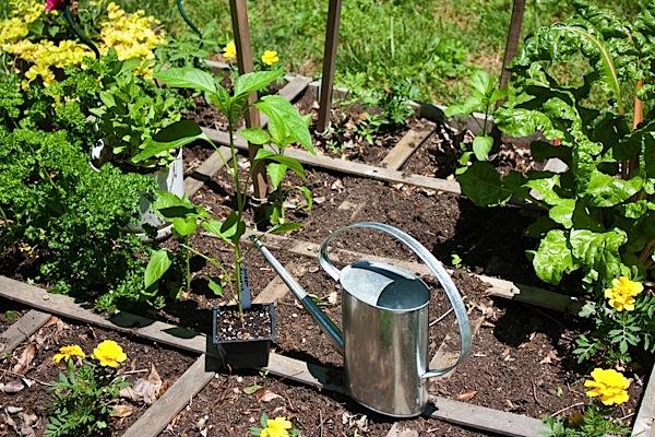 Regaining my Garden + Considering a CSA