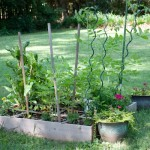 Vegetable Garden Babies and Green Eggs & Havarti