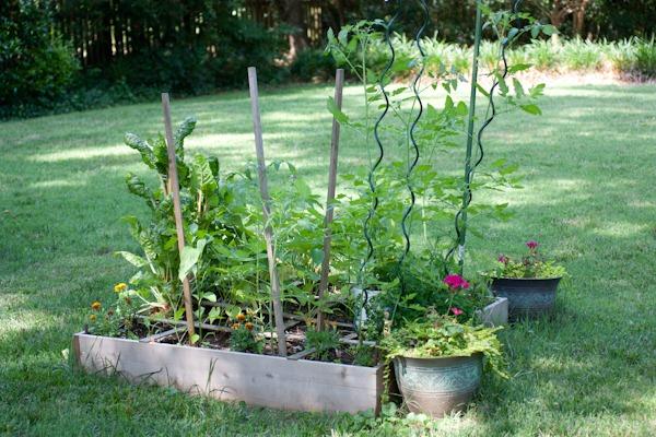 Vegetable Garden Babies and Green Eggs & Havarti