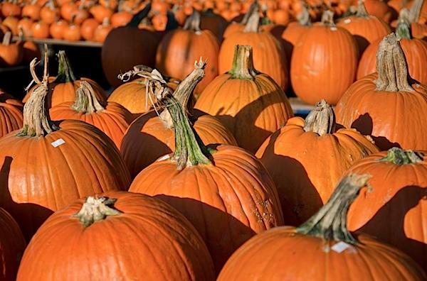 Pumpkins-7327.jpg