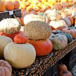 Pumpkins & A Doughnut Fail