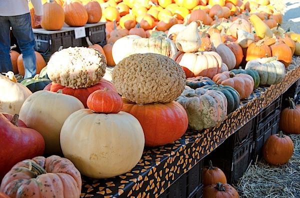 Pumpkins-7333.jpg