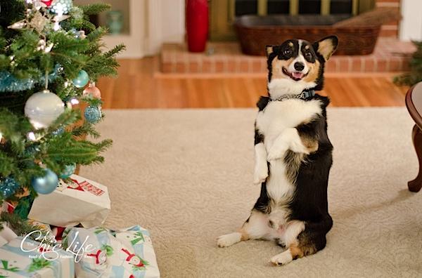 ChristmasDurham-9979.jpg