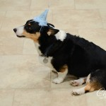 Bailey's 6th Birthday