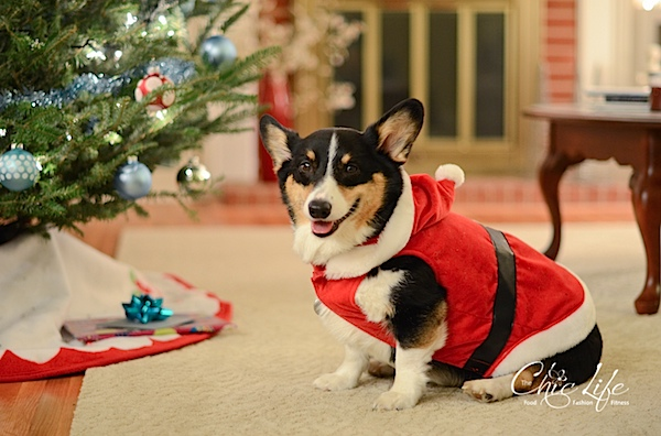 Christmas2013-0511.jpg