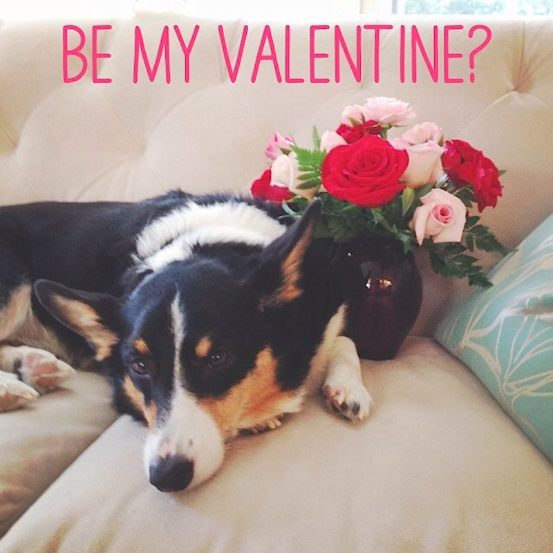 Be My (Corgi) Valentine?
