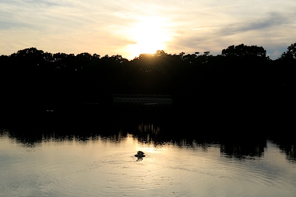 Kiawah Island Trip 2015 Day 3 {Gators, Pool Treats, and Sunset}
