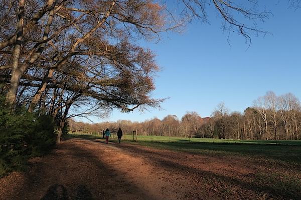 Anne Springs Greenway Afternoon
