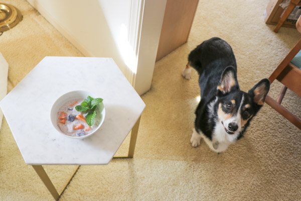 My photography assistant, Bailey the corgi, helps me take photos of Ginataang - a delicious Filipino dessert/snack recipe